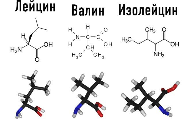 bcaa, аминокислоты, лейцин, изолейцин, валин, спортпит, спортивное питание, добавка, масса