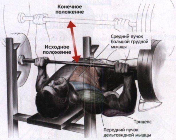 Жим лежа, мышцы, трицепс, дельты, грудь